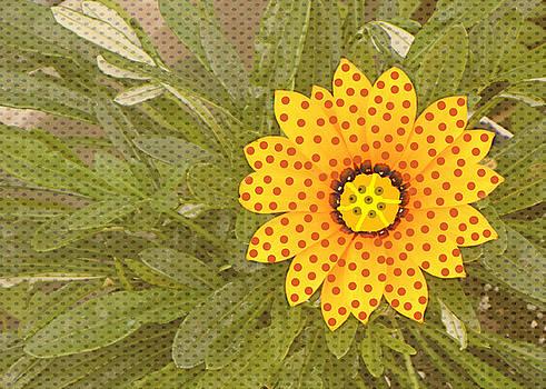 Yellow Daisy Dots by Rosalie Scanlon