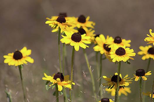 Yellow Daisy by Jodi Vetter