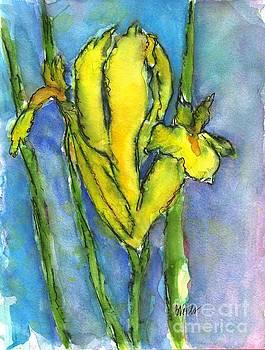 Yellow Dutch Iris by Bev Veals