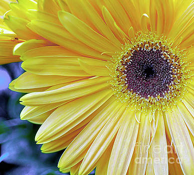 Yellow by Elaine Manley