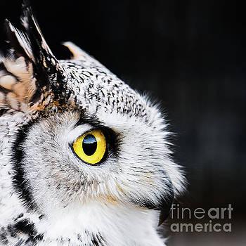 Yellow Eye by Eyeshine Photography