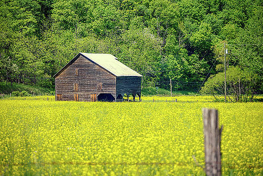 Yellow Field Rustic Shed by Doug Ash