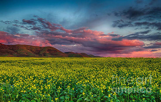 Yellow Fields Forever by Beth Sargent