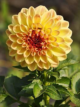 Clayton Bruster - Yellow Flora