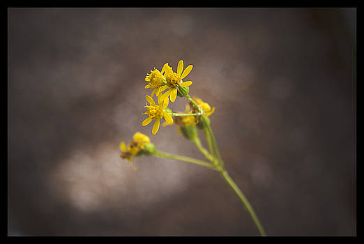 TNT Images - Yellow Flower - 310260