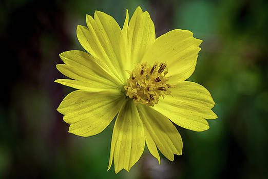 Yellow Flower by Ed Clark