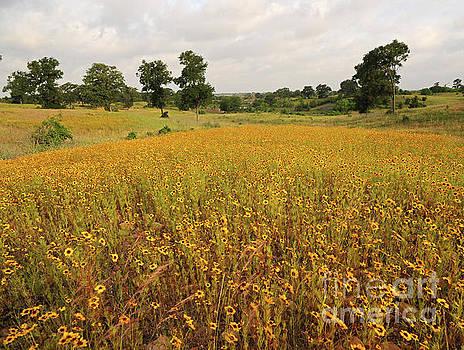 Billy Moore - Yellow Flower Field