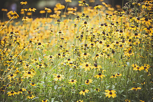 Yellow Flower Field by Sydney Manuel
