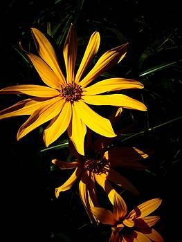 Yellow Flower I by Joaquin Novak-Zarate