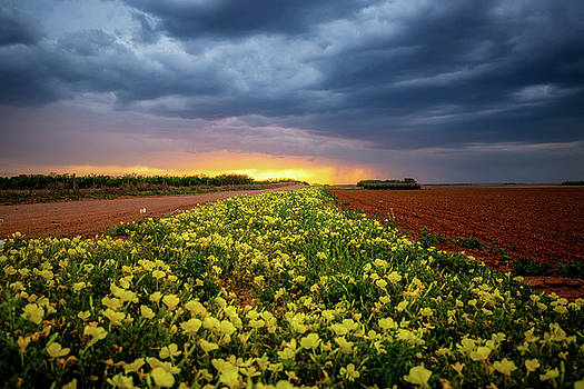 Yellow Flower Road - Wildflowers at Sunset in Texas by Sean Ramsey