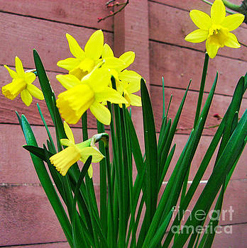Yellow Flowers _ by Tin Tran