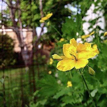 Yellow Flowers by Amanda Richter