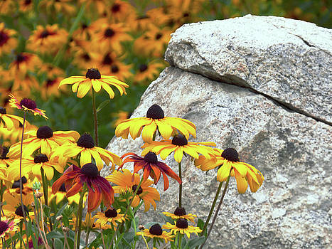 Yellow Flowers and Large Rock by Marcia Socolik