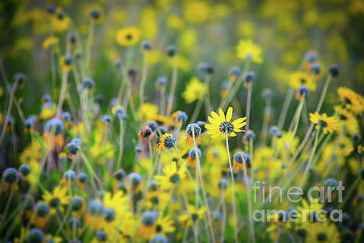 Yellow Flowers by Kelly Wade