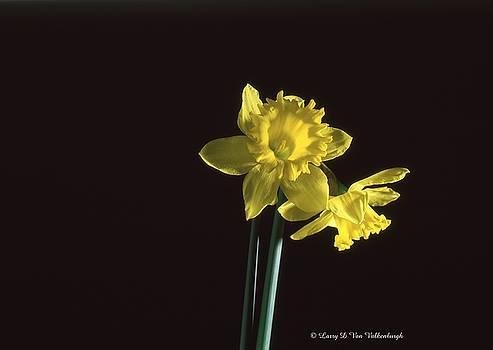 Yellow Flowers by Larry Van Valkenburgh
