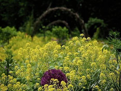 Yellow Flowers by Teresita Abad Doebley