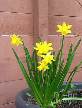 Yellow Flowers by Tin Tran