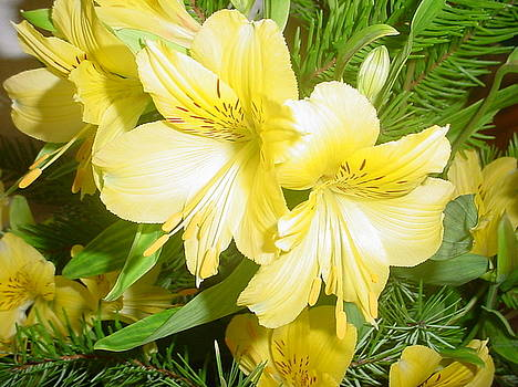 Yellow Flowers with Rosemary by Lara Gill