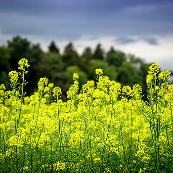 Yellow, Green, Blue by Gretchen Tracy