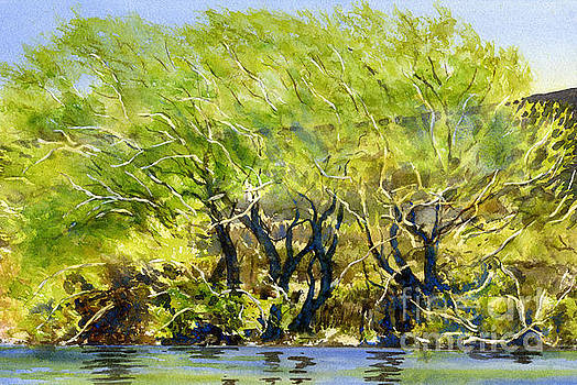 Sharon Freeman - Yellow Green Willow Trees