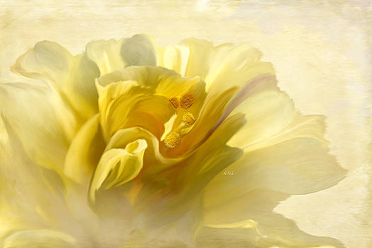 Yellow Hibiscus by Angela A Stanton