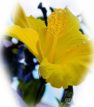 Yellow Hibiscus by Kathleen Struckle