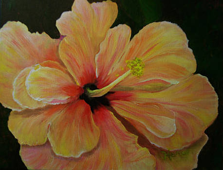 Yellow Hibiscus by Marcia  Hero