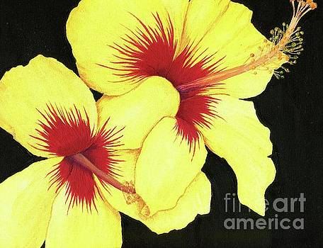 Yellow Hibiscus by Tammie Painter