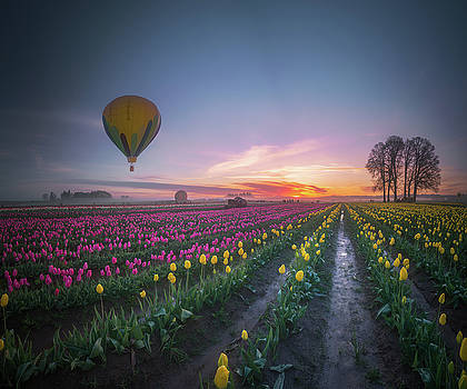 Yellow hot air balloon over tulip field in the morning tranquili by William Freebillyphotography