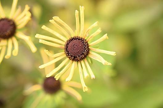 Yellow in Flower by Collette Rogers