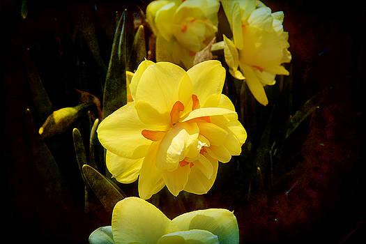 Milena Ilieva - Yellow in Nature