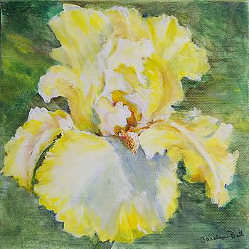 Yellow Iris by Carolyn Bell