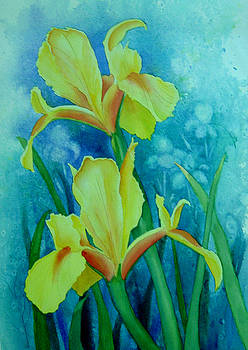 Yellow Iris by Teresa Boston