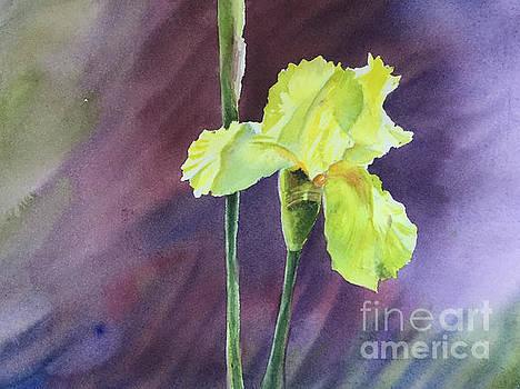 Yellow Iris by Yohana Knobloch