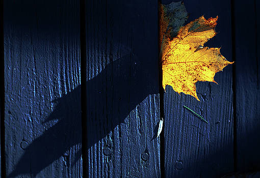 Yellow leaf, blue floor by Eugene Forte