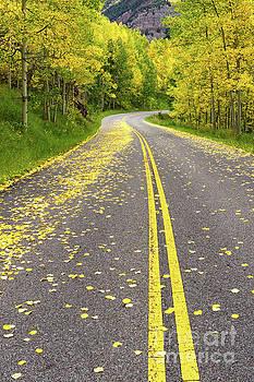 Yellow Leaf Road near Aspen CO by Tibor Vari