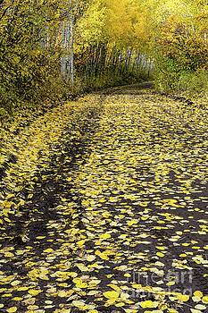 Yellow Leaf Road near Ouray Colorado by Tibor Vari