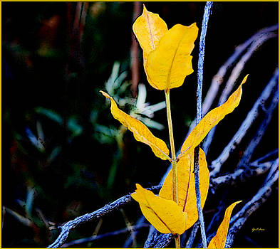 Yellow Leaf Tulips at Night by Gretchen Wrede