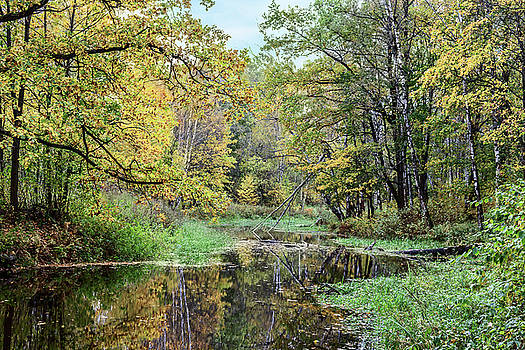 Yellow Leaves Beautiful Autumn Forest Reflected In The Calm Water Of The Forest River by George Westermak