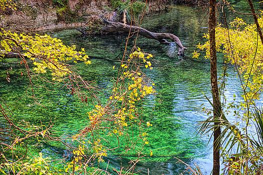 John M Bailey - Yellow Leaves