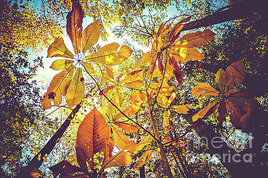 Yellow Leaves of Fall by Joan McCool