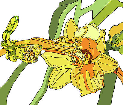 Yellow Lily and Bud, Graphic by Jamie Downs