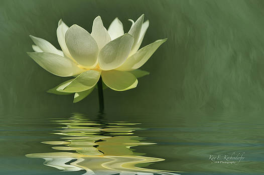 Yellow Lily With Reflections by Kay Kochenderfer