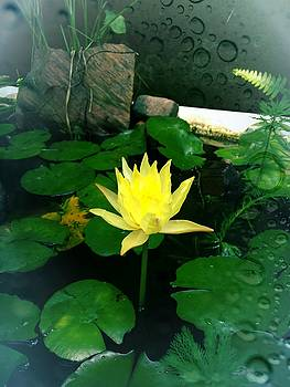 Yellow lotus flower by Michael African Visions