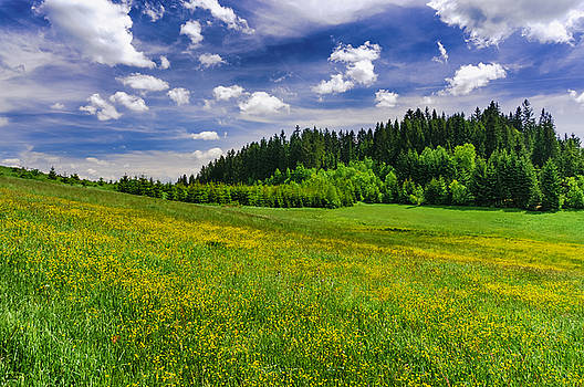 Yellow meadow by Dmytro Korol