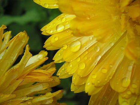 Yellow Meeting Yellow by Kim Blumenstein