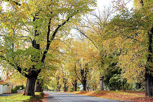Yellow mellow ripened days... Beauteous golden Autumn days by Fir Mamat