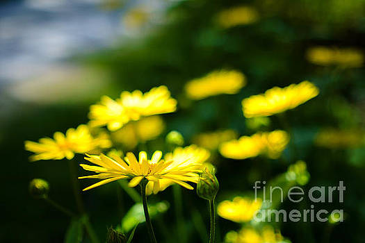 Ismo Raisanen - Yellow Moment