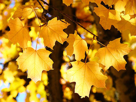 Baslee Troutman - Yellow Nature Tree Leaves art prints Bright Baslee Troutman