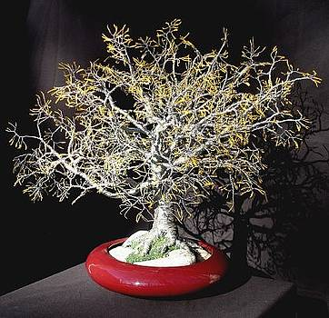Yellow Oak - Wire Tree Sculpture by Sal Villano